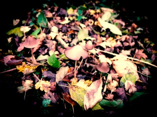 Autumn in the undergrowth